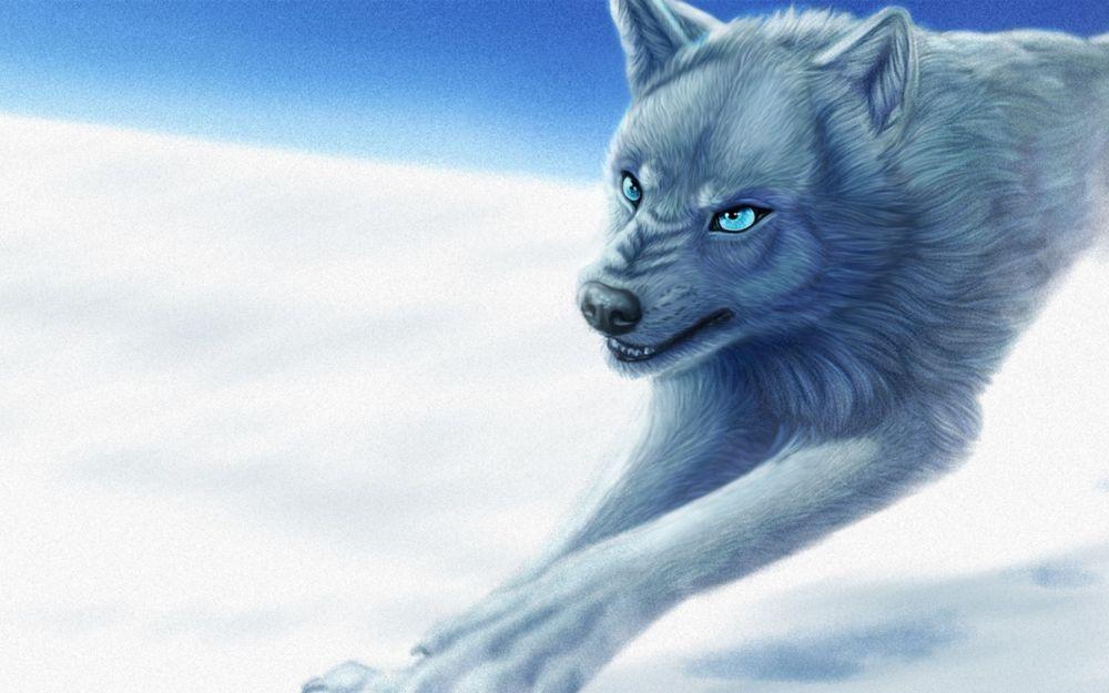 картинки голубоглазых волков боремся то, что
