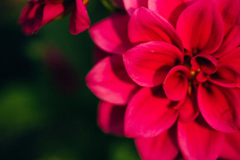 Хатсуне мику розовая