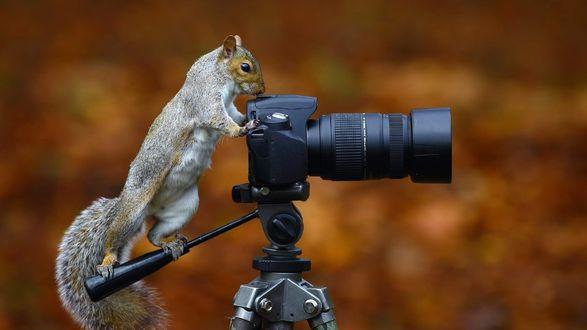 Обои Белка у фотоаппарата