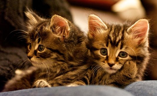 Обои Два милых котенка, ву Martin Tosh