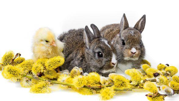 Обои Кролики и цыпленок у ветки вербы