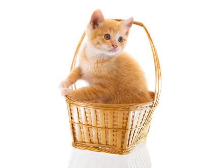 Обои Рыжий котенок сидит в корзинке