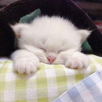 Обои Белый котенок спит, положив лапы на клетчатую ткань