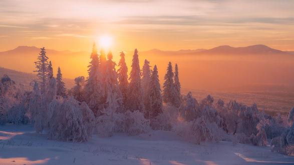 Обои Зимний лес на фоне заходящего солнца