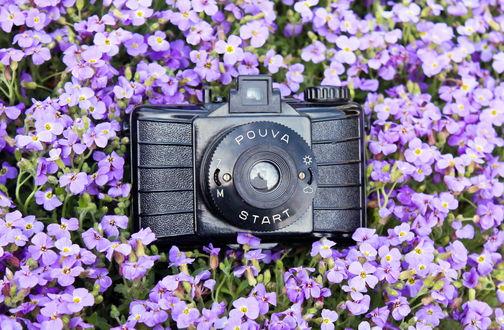 Обои Фотоаппарат Pouva Start среди сиреневых цветов