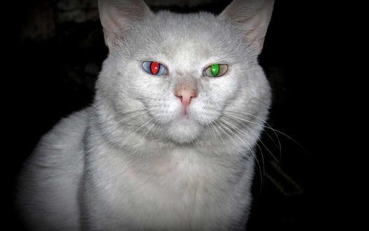 Обои Белый кот в темноте со сверкающими глазами разного цвета