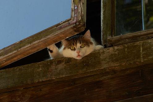 Обои Кот выглядывает из окна