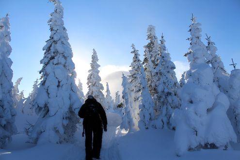 Обои Большой Иремель, человек идет по тропинке через зимний лес