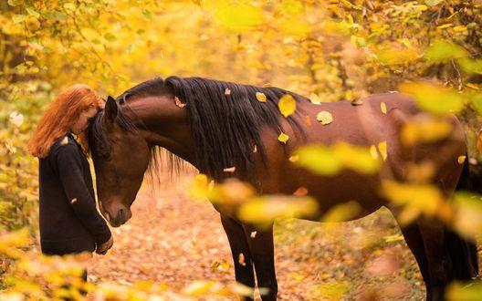 Обои Девушка и лошадь под осенними листьями