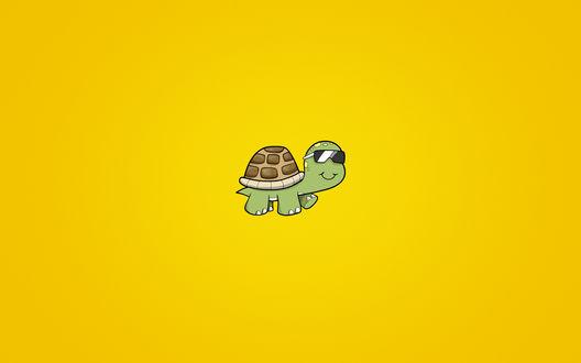 Обои Черепаха в очках на желтом фоне
