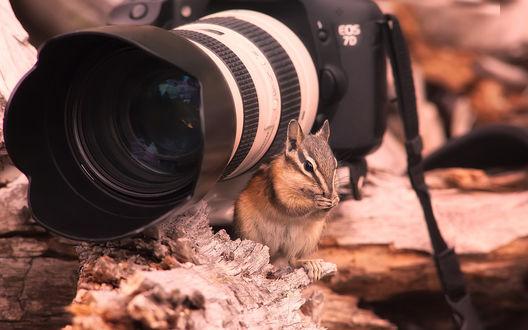 Обои Бурундук сидит возле фотокамеры (Canon Eos 70)