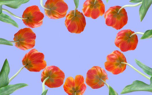 Обои Сердечко из тюльпанов на фоне неба