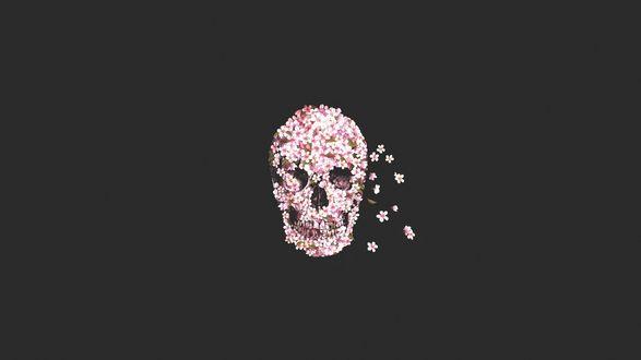 Обои Череп из розовых цветов вишни