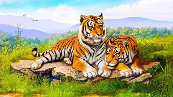 Обои Тигры лежат на камне среди зеленой травы