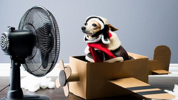 Обои Собака чихуахуа в одежде сидит в игрушечном самолете и смотрит на вентилятор