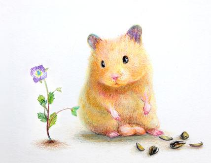 Обои Хомячок смотрит на цветок, рядом лежит скорлупа от семечек