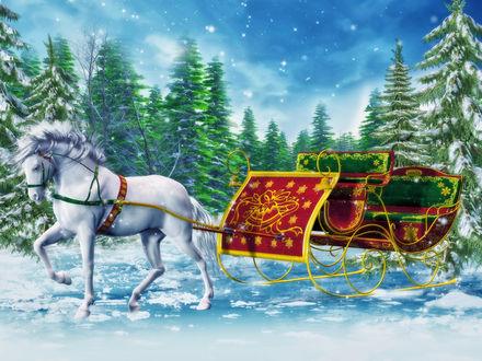 Обои Запряженная белая лошадь в сани
