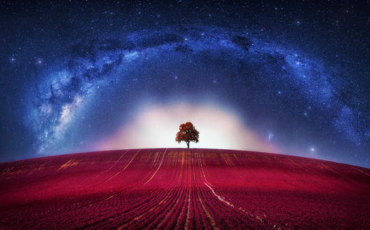 Обои Одинокое дерево в поле на фоне космического неба
