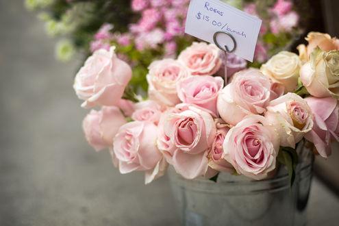 Обои Розовые розы в ведре, ву Tetyana Kovyrina