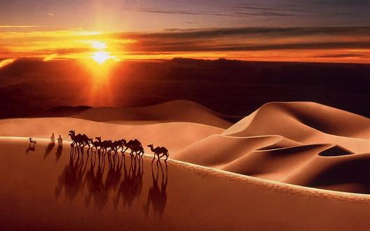 Обои На закате пурпурными становится небо и облака, раскрашенные огненно-красным светилом, цвет песчаных барханов пустыни меняется с желтого на багряный, тени от верблюдов каравана растут и мгновенно исчезнут, как только верхний край солнечного диска уйдет за горизонт