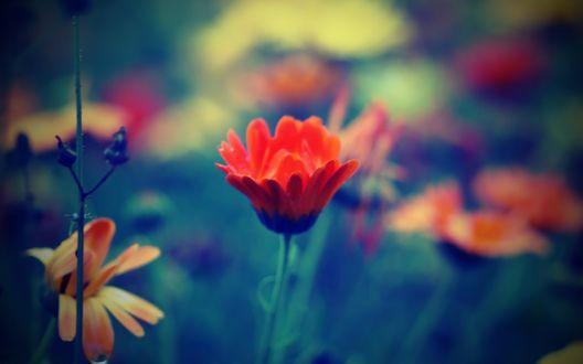 Обои Цветы крупным планом
