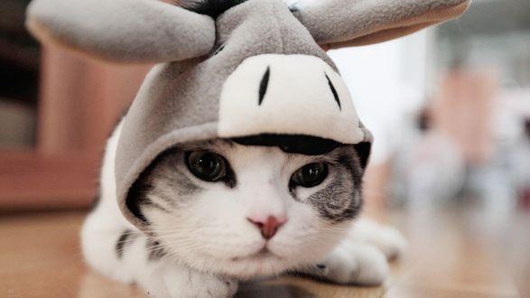 Обои Кот в шапке, напоминающей голову осла