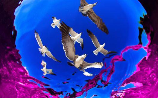Обои Морские чайки, снимок из воды, by Alejandro Prieto