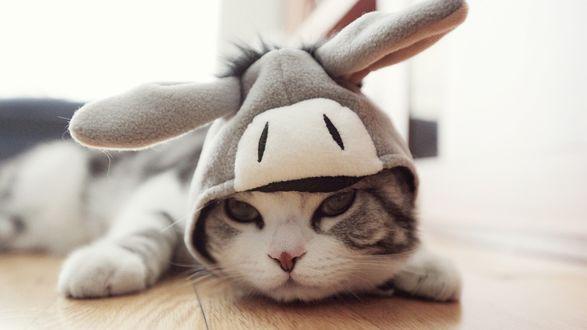 Обои Кот в шапочке, напоминающей осла