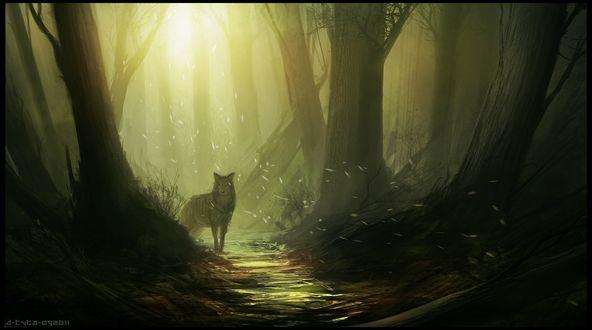 Обои Волк стоит на тропинке в лесу