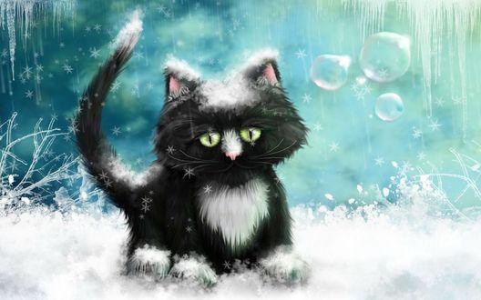 Обои Черно-белый котенок в снегу
