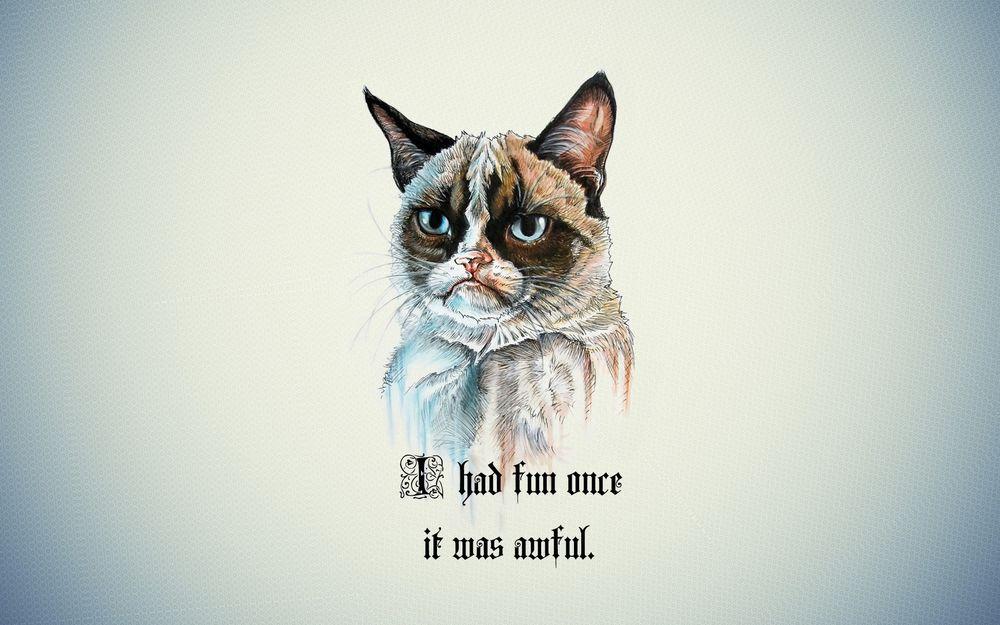 Как коты веселились