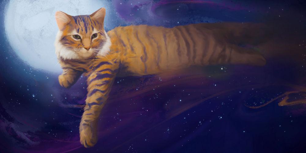 Кот с луной рисунок