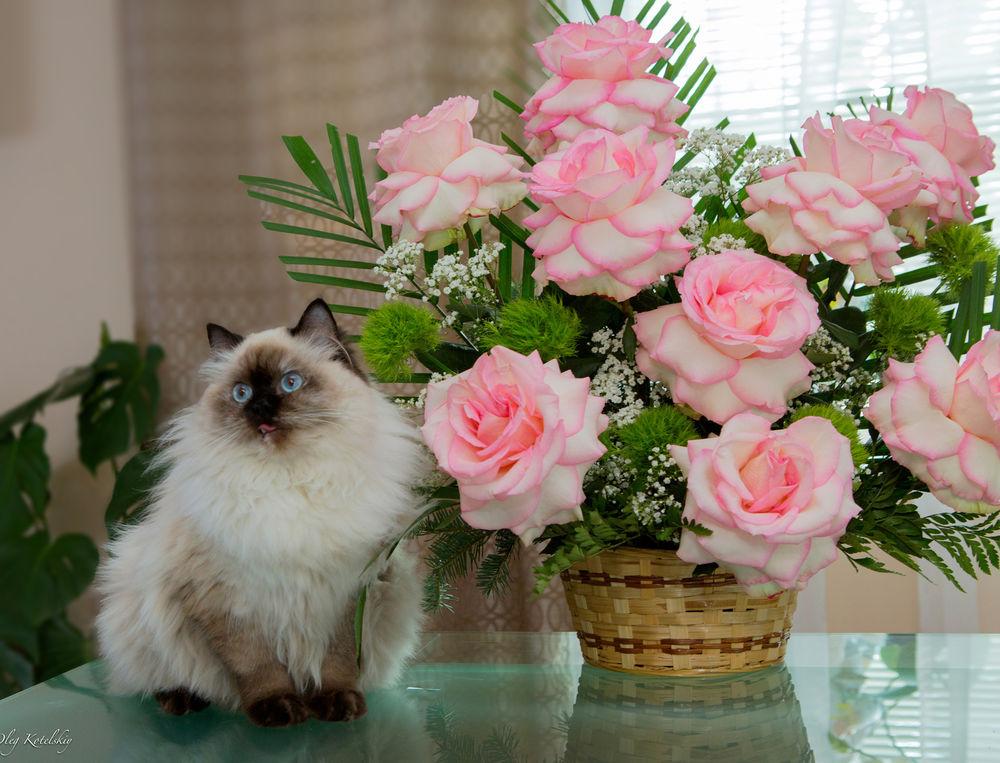 Картинки красивые цветы для настроения, картинки