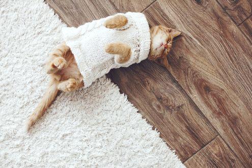 Обои Рыжий котик в белом вязанном свитере нежится на деревянном полу, радом с белым ворсистым ковром