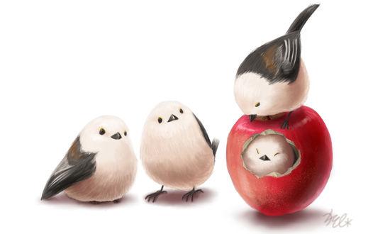 Обои Четыре птички, одна из которых внутри яблока