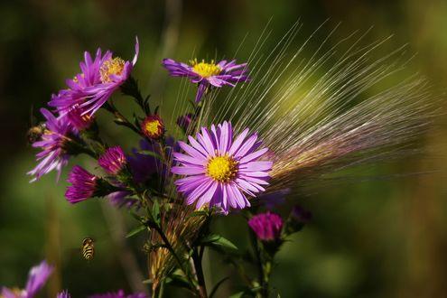Обои Пчелка порхает возле розовых полевых цветов с колосьями ржи