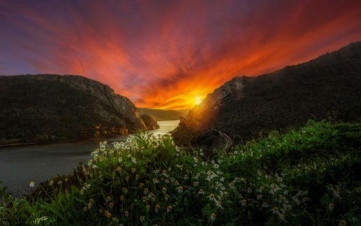 Обои Ромашки на переднем плане на фоне заката солнца и дороги в горах у реки, ву Faszination Fotografie / M. H