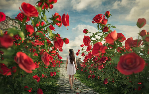 Обои Алиса в стране роз / девушка идет по тропинке, по бокам которой растут кусты с красными розами