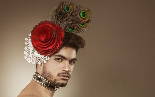 Обои Парень с бородой в гламурном образе: с большой красной декоративной розой и павлиньими перьями на голове, и в ошейнике с шипами