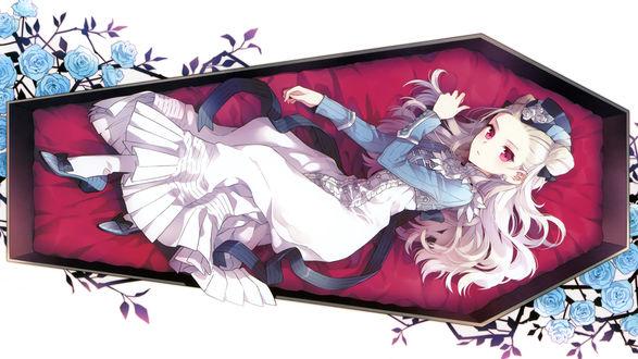 Обои Девушка-вампирша с белыми волосами и красными глазами лежит в гробу среди голубых роз на белом фоне, персонаж карточной аниме онлайн игры Sword Girls, art by nardack