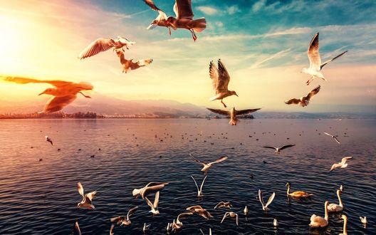 Обои Чайки парят над морем на закате солнца