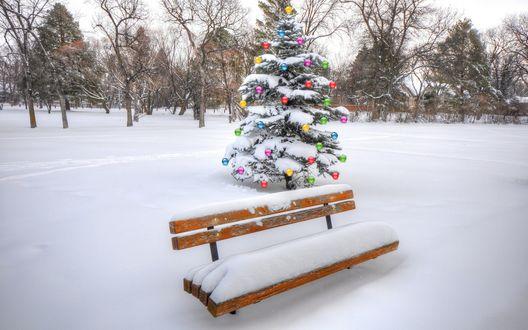 Обои Скамейка, покрытая снегом, позади которой стоит наряженная елка