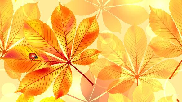 Обои Божья коровка на желтых каштановых листьях