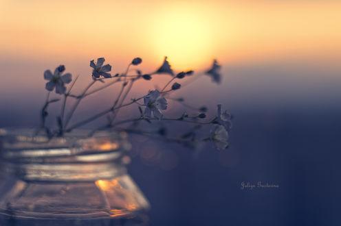 Обои Цветы в баночке на фоне заката, фотограф Юлия Густерина