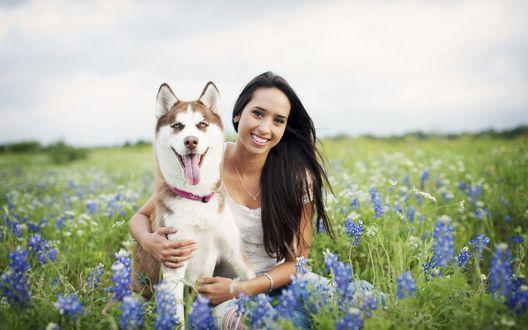 Обои Улыбающаяся девушка с собакой породы хаски сидят в поле среди голубых цветов
