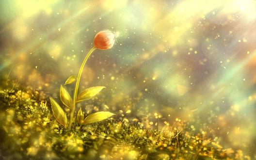 Обои На тюльпане сидит бабочка, by bounin