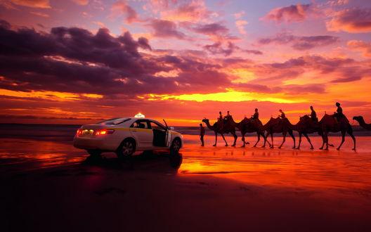 Обои Караван верблюдов идет по вечернему морскому берегу, рядом стоит такси / taxi