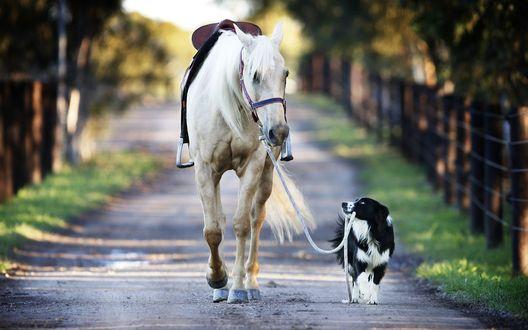 Обои Лошадь Кико идет на прогулку с бордер-колли по имени Хекан. Друзья / Friends by David Caird