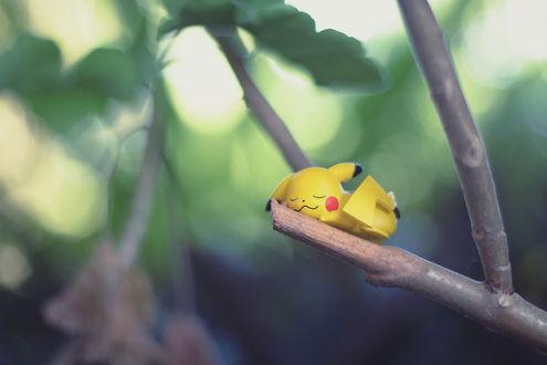 Обои Игрушка спящего Пикачу / Pikachu из аниме Покемон / Pokemon на ветке дерева