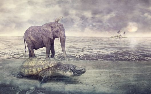 Обои Слон верхом на черепахе, которая плывет в море, на голове слона сидит сурок